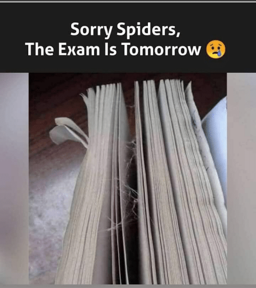 Spiders: Sorry Spiders,  The Exam Is Tomorrow