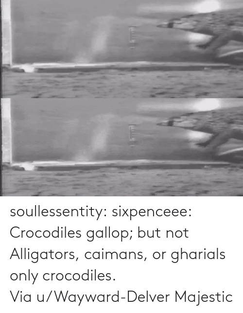 www: soullessentity: sixpenceee: Crocodiles gallop; but not Alligators, caimans, or gharials only crocodiles. Via u/Wayward-Delver Majestic