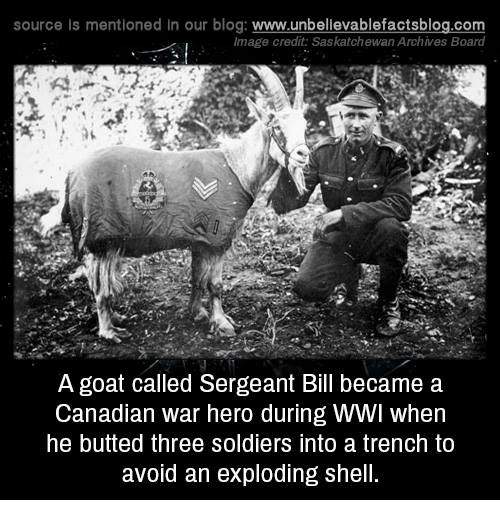 saskatchewan: source Is mentioned In our blog  www.unbelievablefactsblog.com  Image credit Saskatchewan Archives Board  A goat called Sergeant Bill became a  Canadian war hero during WWI when  he butted three Soldiers into a trench to  avoid an exploding shell.