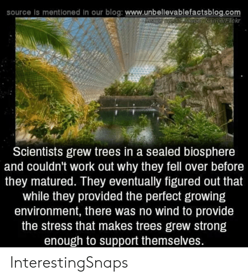 Work, Blog, and Trees: source is mentioned in our blog: www.unbellevablefactsblog.com  bnage credite Jaeper Nance/Fickr  Scientists grew trees in a sealed biosphere  and couldn't work out why they fell over before  they matured. They eventually figured out that  while they provided the perfect growing  environment, there was no wind to provide  the stress that makes trees grew strong  enough to support themselves. InterestingSnaps