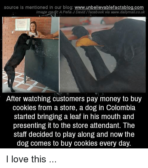 Cookies, Facebook, and Love: source is mentioned in our blog: www.unbellevablefactsblog.com  Image credit A Peña J David/facebook via waww.dailymail.co.uk  After watching customers pay money to buy  cookies from a store, a dog in Colombia  started bringing a leaf in his mouth and  presenting it to the store attendant. The  staff decided to play along and now the  dog comes to buy cookies every day. I love this ...