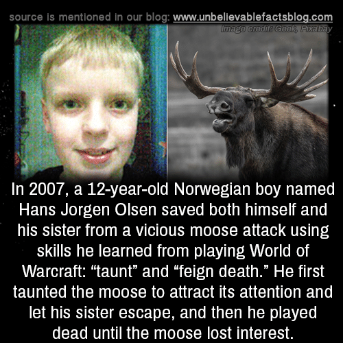 "Memes, Lost, and Blog: source is mentioned in our blog: www.unbellevablefactsblog.com  In 2007, a 12-year-old Norwegian boy named  Hans Jorgen Olsen saved both himself and  his sister from a vicious moose attack using  skills he learned from playing World of  Warcraft: ""taunt"" and ""feign death."" He first  taunted the moose to attract its attention and  let his sister escape, and then he played  dead until the moose lost interest."