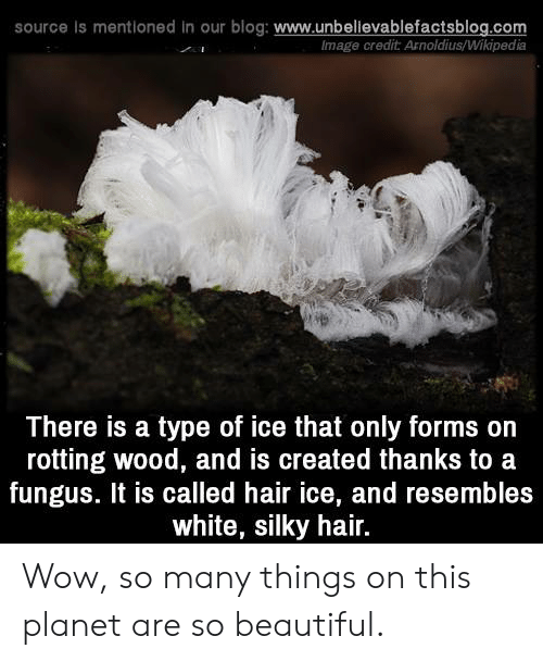 Beautiful, Memes, and Wikipedia: source Is mentioned in our blog: www.unbellevablefactsblog.com  lmage credit Arnoldius/Wikipedia  There is a type of ice that only forms on  rotting wood, and is created thanks to a  fungus. It is called hair ice, and resembles  white, silky hair. Wow, so many things on this planet are so beautiful.