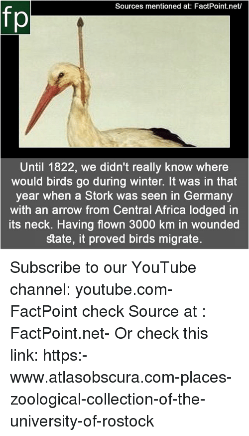 Africa, Memes, and Winter: Sources mentioned at: FactPoint.net/  fp  Until 1822, we didn't really know where  would birds go during winter. It was in that  year when a Stork was seen in Germany  with an arrow from Central Africa lodged in  its neck. Having flown 3000 km in wounded  state, it proved birds migrate Subscribe to our YouTube channel: youtube.com-FactPoint check Source at : FactPoint.net- Or check this link: https:-www.atlasobscura.com-places-zoological-collection-of-the-university-of-rostock