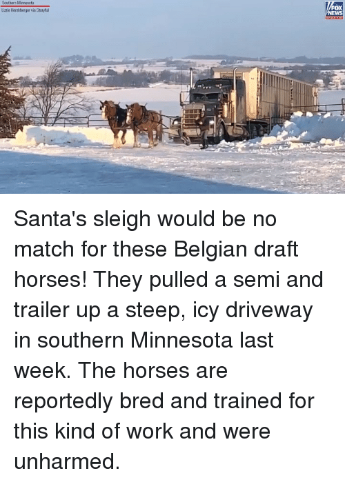 Belgian: Southern Minnesota  OX  EWS  Lizzie Hershberger via Storyful Santa's sleigh would be no match for these Belgian draft horses! They pulled a semi and trailer up a steep, icy driveway in southern Minnesota last week. The horses are reportedly bred and trained for this kind of work and were unharmed.