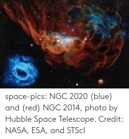 Blue: space-pics:  NGC 2020 (blue) and (red) NGC 2014, photo by Hubble Space Telescope. Credit: NASA, ESA, and STScI