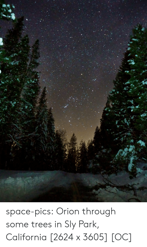Sly: space-pics:  Orion through some trees in Sly Park, California [2624 x 3605] [OC]