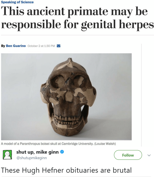 Herpes, Hugh Hefner, and Shut Up: Speaking of Science  This ancient primate may be  responsible for genital herpes  By Ben Guarino October 2 at 1:30 PM  A model of a Paranthropus boisei skull at Cambridge University. (Lou ise Walsh)   shut up, mike ginn  Follow  @shutupmikeginn  These Hugh Hefner obituaries are brutal