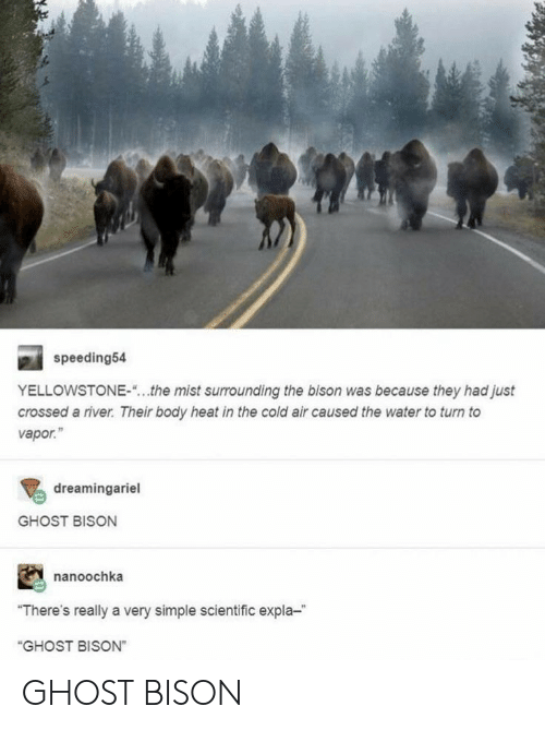 """scientific: speeding54  YELLOWSTONE-  the mist surrounding the bison was because they had just  crossed a river. Their body heat in the cold air caused the water to turn to  vapor.""""  dreamingariel  GHOST BISON  nanoochka  """"There's really a very simple scientific expla-  """"GHOST BISON"""" GHOST BISON"""