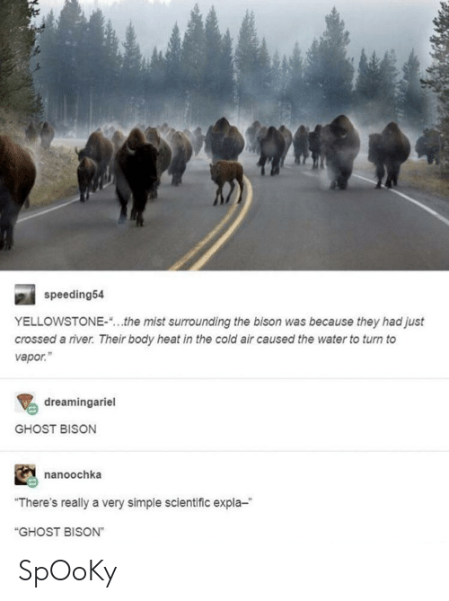 "Ghost, Heat, and Water: speeding54  YELLOWSTONE-""...the mist surrounding the bison was because they had just  crossed a river. Their body heat in the cold air caused the water to turn to  vapor.""  dreamingariel  GHOST BISON  nanoochka  ""There's really a very simple scientific expla-  ""GHOST BISON"" SpOoKy"