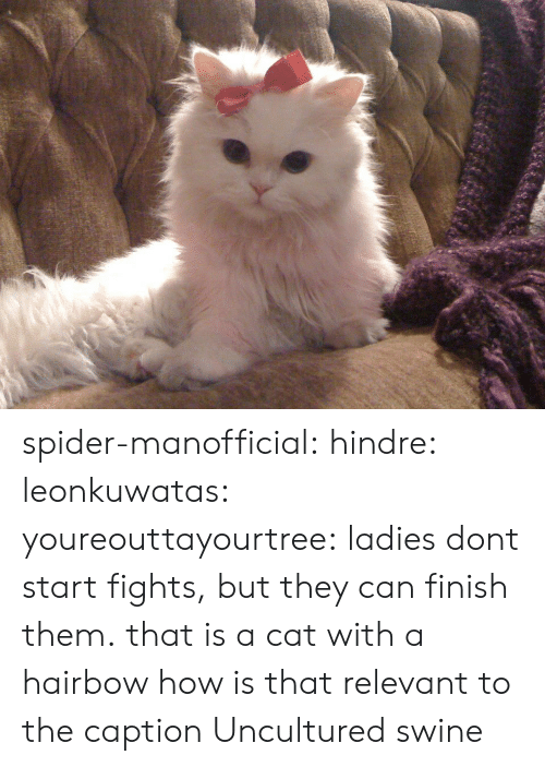 Gif, Spider, and Tumblr: spider-manofficial:  hindre:  leonkuwatas:  youreouttayourtree:  ladies dont start fights, but they can finish them.  that is a cat with a hairbow how is that relevant to the caption    Uncultured swine