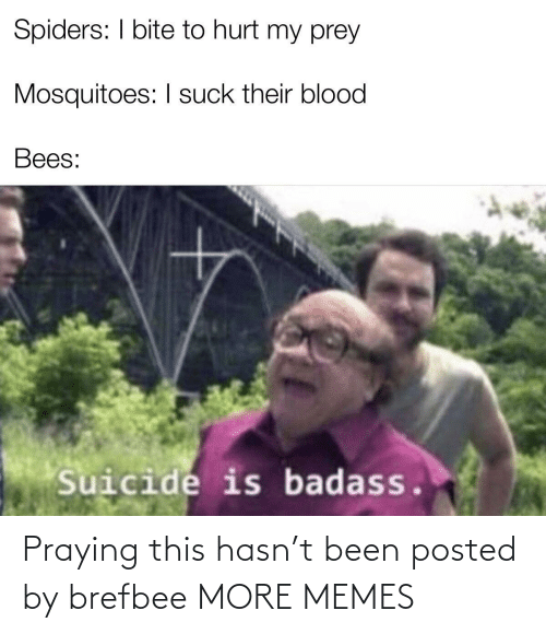 Spiders: Spiders: I bite to hurt my prey  Mosquitoes: I suck their blood  Bees:  Suicide is badass. Praying this hasn't been posted by brefbee MORE MEMES