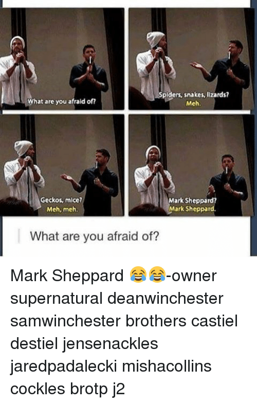 Cockle: Spiders, snakes, Ilzards?  What are you afraid of?  Meh  Geckos, mice?  Mark Sheppard?  Mark Sheppard  Meh, meh.  What are you afraid of? Mark Sheppard 😂😂-owner supernatural deanwinchester samwinchester brothers castiel destiel jensenackles jaredpadalecki mishacollins cockles brotp j2