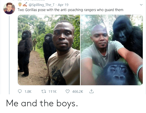 Rangers, Anti, and Boys: @Spilling_The_T Apr 19  Two Gorillas pose with the anti-poaching rangers who guard them  L111K  1.8K  466.2K Me and the boys.