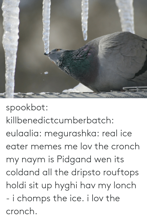 real: spookbot: killbenedictcumberbatch:  eulaalia:  megurashka: real ice eater memes me  lov the cronch  my naym is Pidgand wen its coldand all the dripsto rouftops holdi sit up hyghi hav my lonch - i chomps the ice. i lov the cronch.