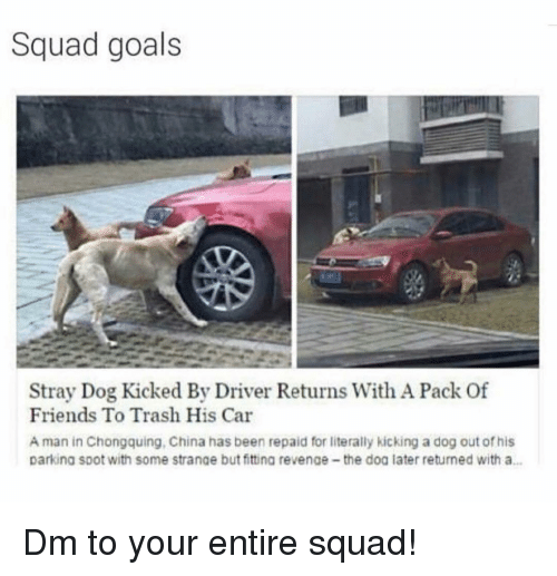 Friends, Goals, and Memes: Squad goals  Stray Dog Kicked By Driver Returns With A Pack Of  Friends To Trash His Car  A man in Chongquing, China has been repaid for literally kicking a dog out of his  parking SDot with some strange but fitting revenae-the doa later returned with a… Dm to your entire squad!