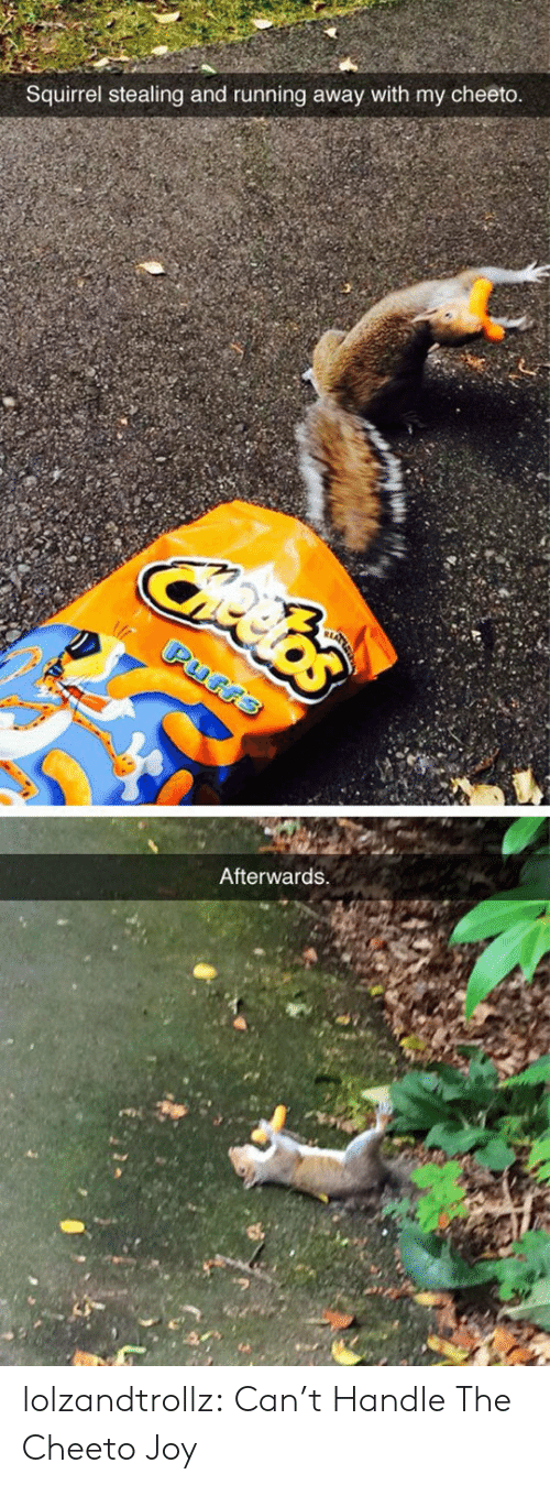 Tumblr, Blog, and Squirrel: Squirrel stealing and running away with my cheeto  Afterwards lolzandtrollz:  Can't Handle The Cheeto Joy