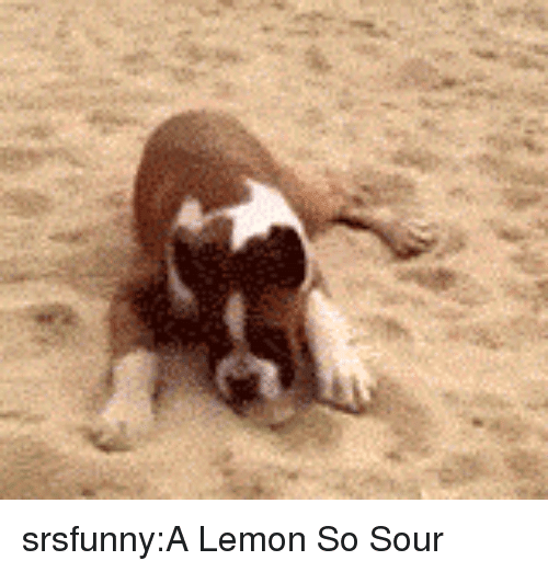 Tumblr, Blog, and Http: srsfunny:A Lemon So Sour