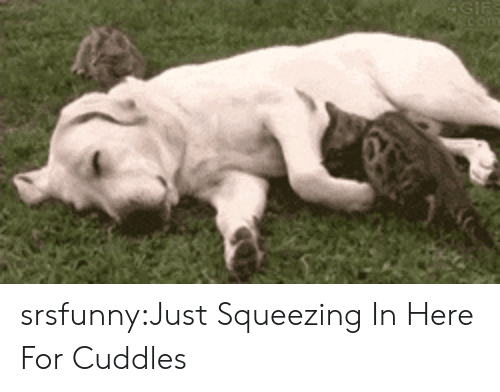 Squeezing: srsfunny:Just Squeezing In Here For Cuddles