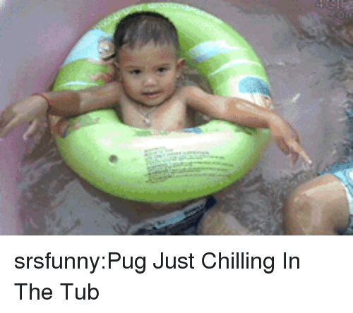 Tumblr, Blog, and Http: srsfunny:Pug Just Chilling In The Tub