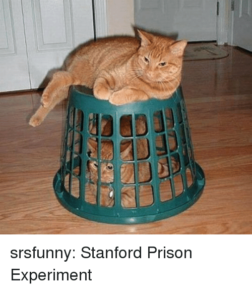 Tumblr, Prison, and Blog: srsfunny: Stanford Prison Experiment