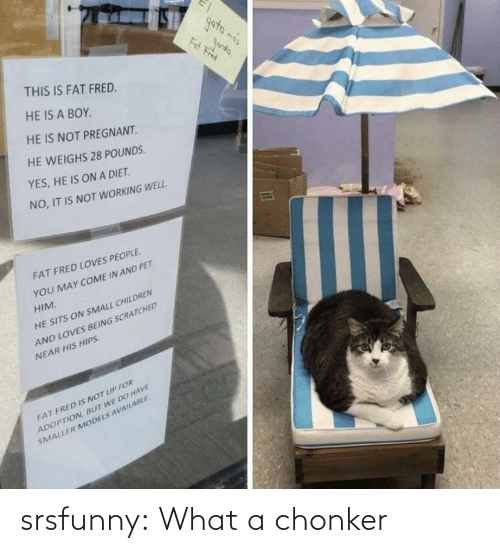 net: srsfunny:  What a chonker