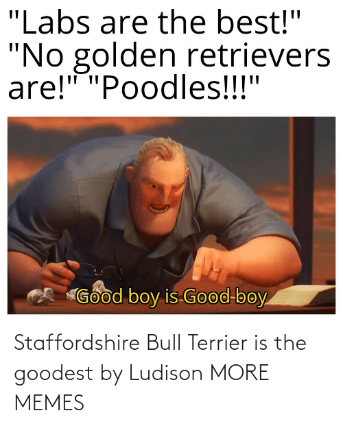 hilarious memes: Staffordshire Bull Terrier is the goodest by Ludison MORE MEMES