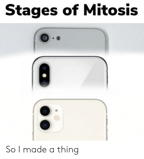 Thing, Made, and Mitosis: Stages of Mitosis So I made a thing