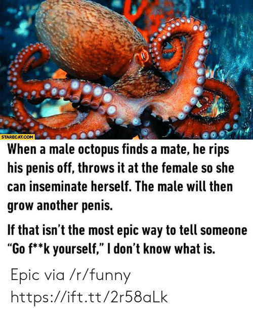 "Most Epic: STARECAT.COM  When a male octopus finds a mate, he rips  his penis off, throws it at the female so she  can inseminate herself. The male will then  grow another penis.  f that isn t the most epic way to tell someone  ""Go f**k yourself,"" I don't know what is. Epic via /r/funny https://ift.tt/2r58aLk"
