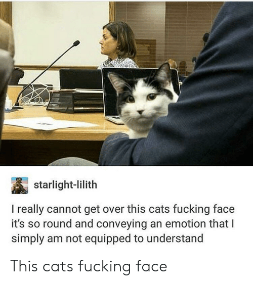 Cats, Fucking, and Cat: starlight-lilith  I really cannot get over this cats fucking face  it's so round and conveying an emotion that I  simply am not equipped to understand This cats fucking face
