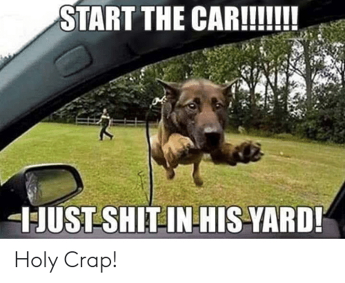 Shit, Car, and Yard: START THE CAR!!  JUST SHIT INHIS-YARD! Holy Crap!