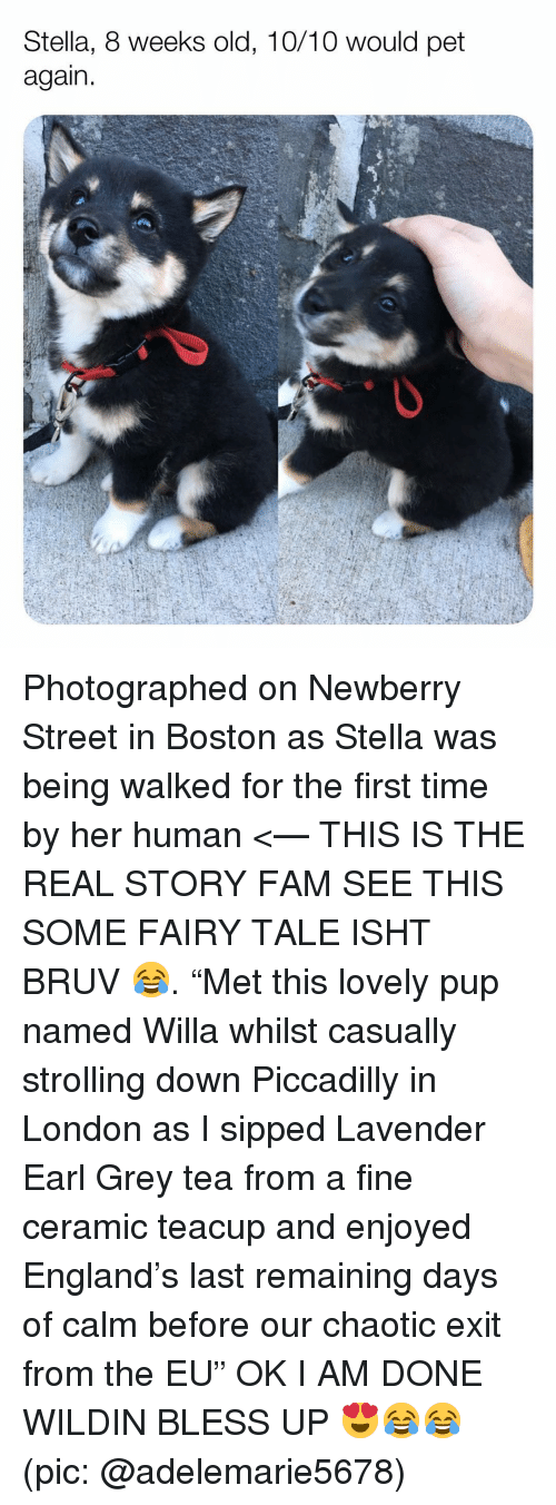 "Bless Up, England, and Fam: Stella, 8 weeks old, 10/10 would pet  again Photographed on Newberry Street in Boston as Stella was being walked for the first time by her human <— THIS IS THE REAL STORY FAM SEE THIS SOME FAIRY TALE ISHT BRUV 😂. ""Met this lovely pup named Willa whilst casually strolling down Piccadilly in London as I sipped Lavender Earl Grey tea from a fine ceramic teacup and enjoyed England's last remaining days of calm before our chaotic exit from the EU"" OK I AM DONE WILDIN BLESS UP 😍😂😂 (pic: @adelemarie5678)"