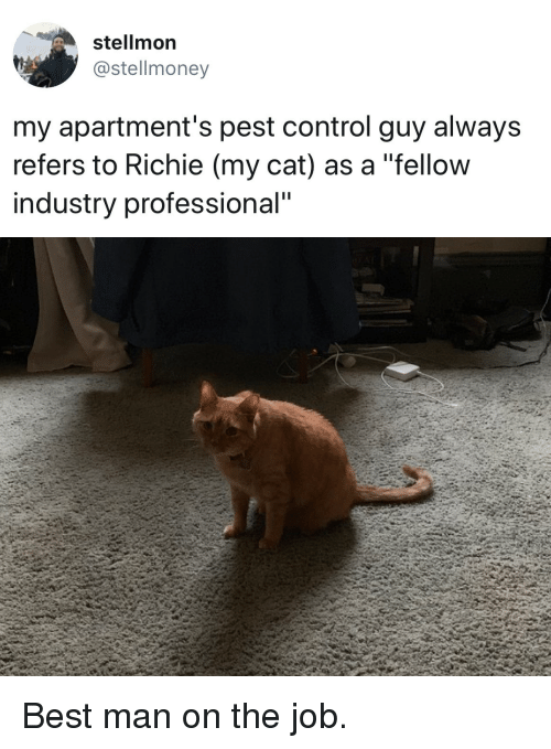 "Control, Best, and Cat: stellmon  @stellmoney  my apartment's pest control guy always  refers to Richie (my cat) as a ""fellow  industry professional"" Best man on the job."