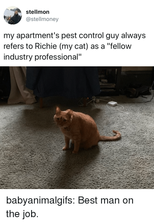 "Tumblr, Control, and Best: stellmon  @stellmoney  my apartment's pest control guy always  refers to Richie (my cat) as a ""fellow  industry professional"" babyanimalgifs:  Best man on the job."