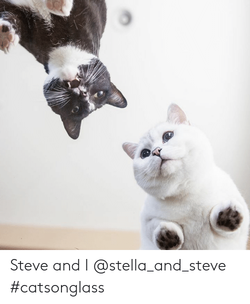 stella: Steve and I @stella_and_steve #catsonglass