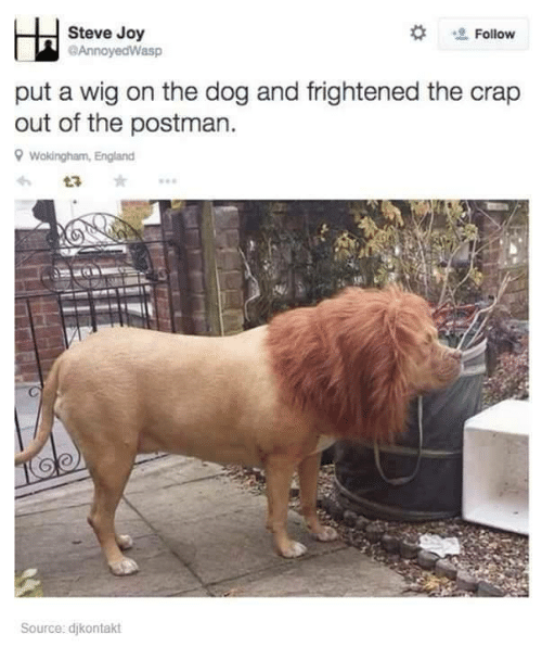 England, Funny, and Wigs: Steve Joy  Follow  @Annoyed Wasp  put a wig on the dog and frightened the crap  out of the postman.  9 Wokingham, England  Source: djkontakt