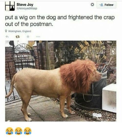 England, Memes, and 🤖: Steve Joy  Follow  eAnnoyedWasp  put a wig on the dog and frightened the crap  out of the postman.  9 Wokingham, England  ta 😂😂😂