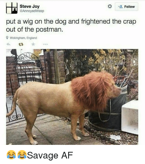 Af, England, and Memes: Steve Joy  Follow  GAnnoyedWasp  put a wig on the dog and frightened the crap  out of the postman.  9 Wokingham, England 😂😂Savage AF