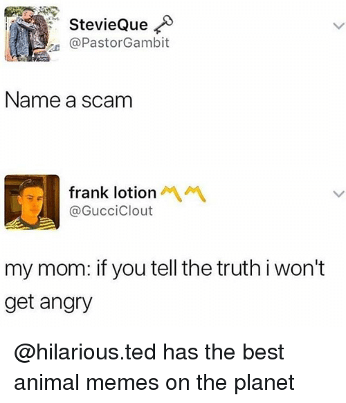 Memes, Ted, and Animal: StevieQue  @PastorGambit  Name a scam  frank lotion  @GucciClout  my mom: if you tell the truth i won't  get angry @hilarious.ted has the best animal memes on the planet