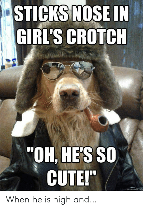 "quickmeme: STICKS NOSE IN  GIRL'S CROTCH  ""OH, HE'S SO  CUTE!""  quickmeme.com When he is high and…"
