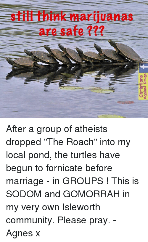 "Community, Marriage, and Memes: stiffithink marijuanas  are safe After a group of atheists dropped ""The Roach"" into my local pond, the turtles have begun to fornicate before marriage - in GROUPS !   This is SODOM and GOMORRAH in my very own Isleworth community. Please pray. - Agnes x"