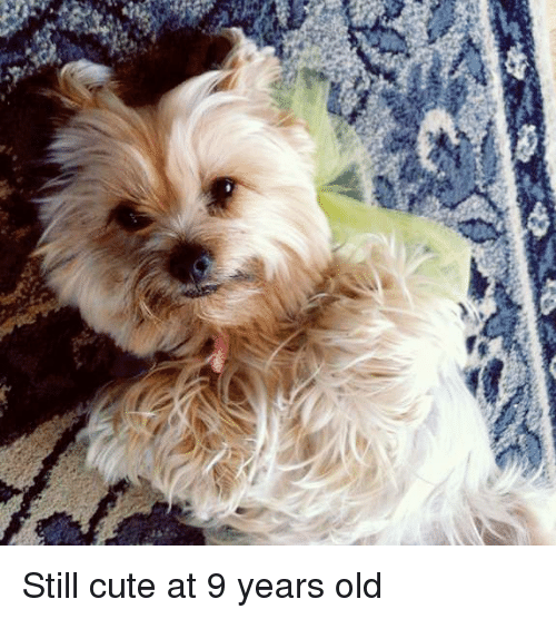 Cute, Old, and Still: Still cute at 9 years old