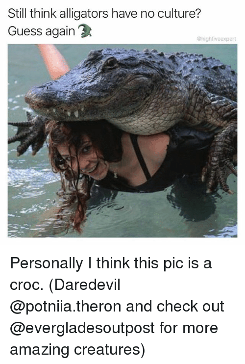 Crocs, Memes, and Daredevil: Still think alligators have no culture?  Guess again  @highfiveexpert Personally I think this pic is a croc. (Daredevil @potniia.theron and check out @evergladesoutpost for more amazing creatures)