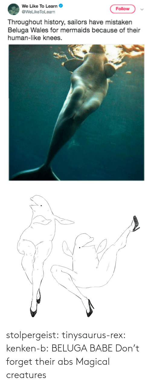 img: stolpergeist: tinysaurus-rex:  kenken-b: BELUGA BABE Don't forget their abs  Magical creatures