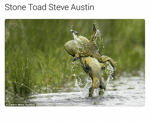 Toade: Stone Toad Steve Austin  OCaters News Agency