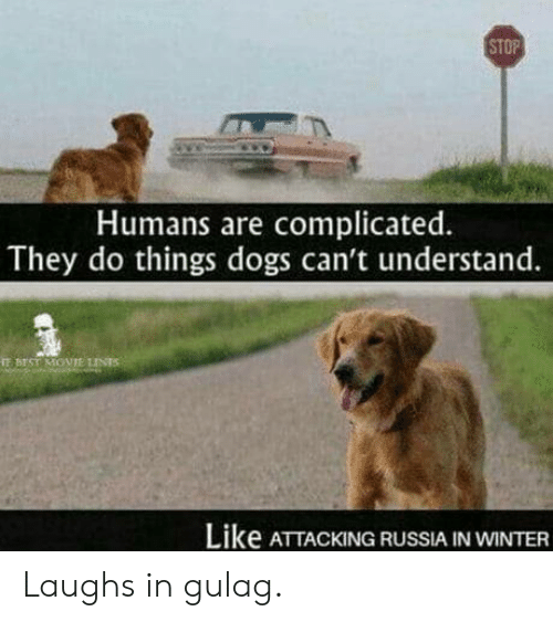 gulag: STOP  Humans are complicated.  They do things dogs can't understand.  鋩BEST MOVIE tJNTS  Like ATTACKING RUSSIA IN WINTER Laughs in gulag.