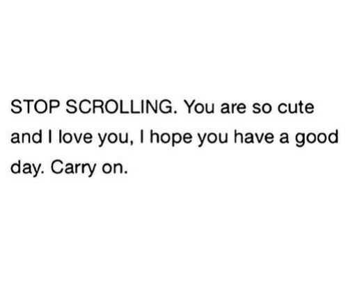 Cute, Love, and I Love You: STOP SCROLLING. You are so cute  and I love you, I hope you have a good  day. Carry on.