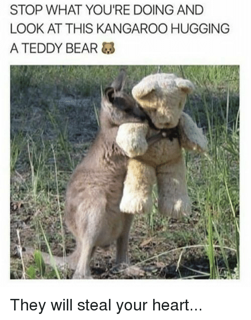 Bear, Heart, and Kangaroo: STOP WHAT YOU'RE DOING AND  LOOK AT THIS KANGAROO HUGGING  A TEDDY BEAR They will steal your heart...