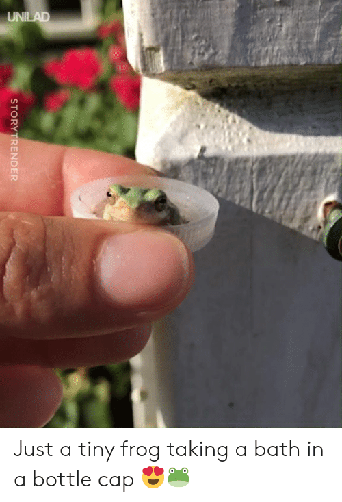 Dank, 🤖, and Frog: STORY TRENDER Just a tiny frog taking a bath in a bottle cap 😍🐸
