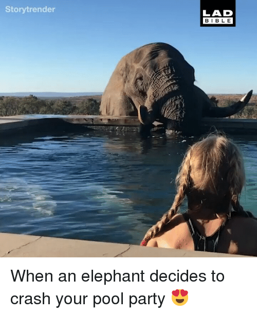 Memes, Party, and Elephant: Storytrender  LAD  BIBL E When an elephant decides to crash your pool party 😍